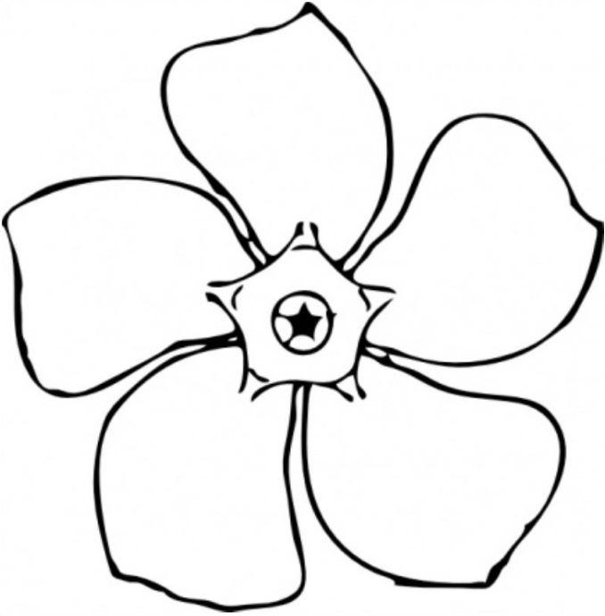 Tranh tô màu bông hoa năm cánh đơn giản nhất