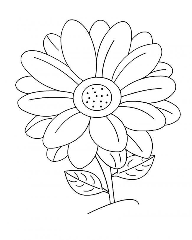 Tranh tô màu về hoa cúc đẹp nhất