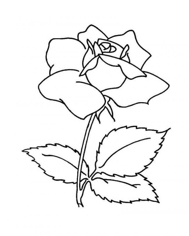 Tranh tô màu đoá hồng đơn giản mà đẹp nhất
