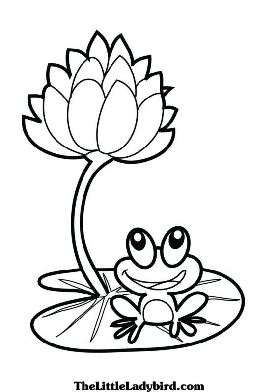 Tranh tô màu hoa sen đẹp và chú ếch đáng yêu