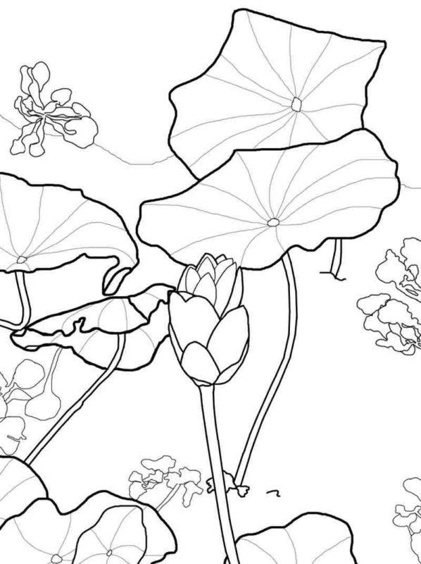 Tranh tô màu hoa sen giữa lá sen