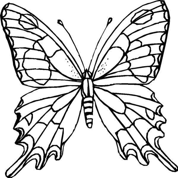 Tranh tô màu con bướm dễ thương nhất